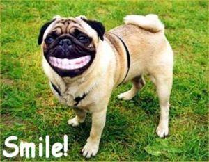 Orlando Espinosa dog_smiling