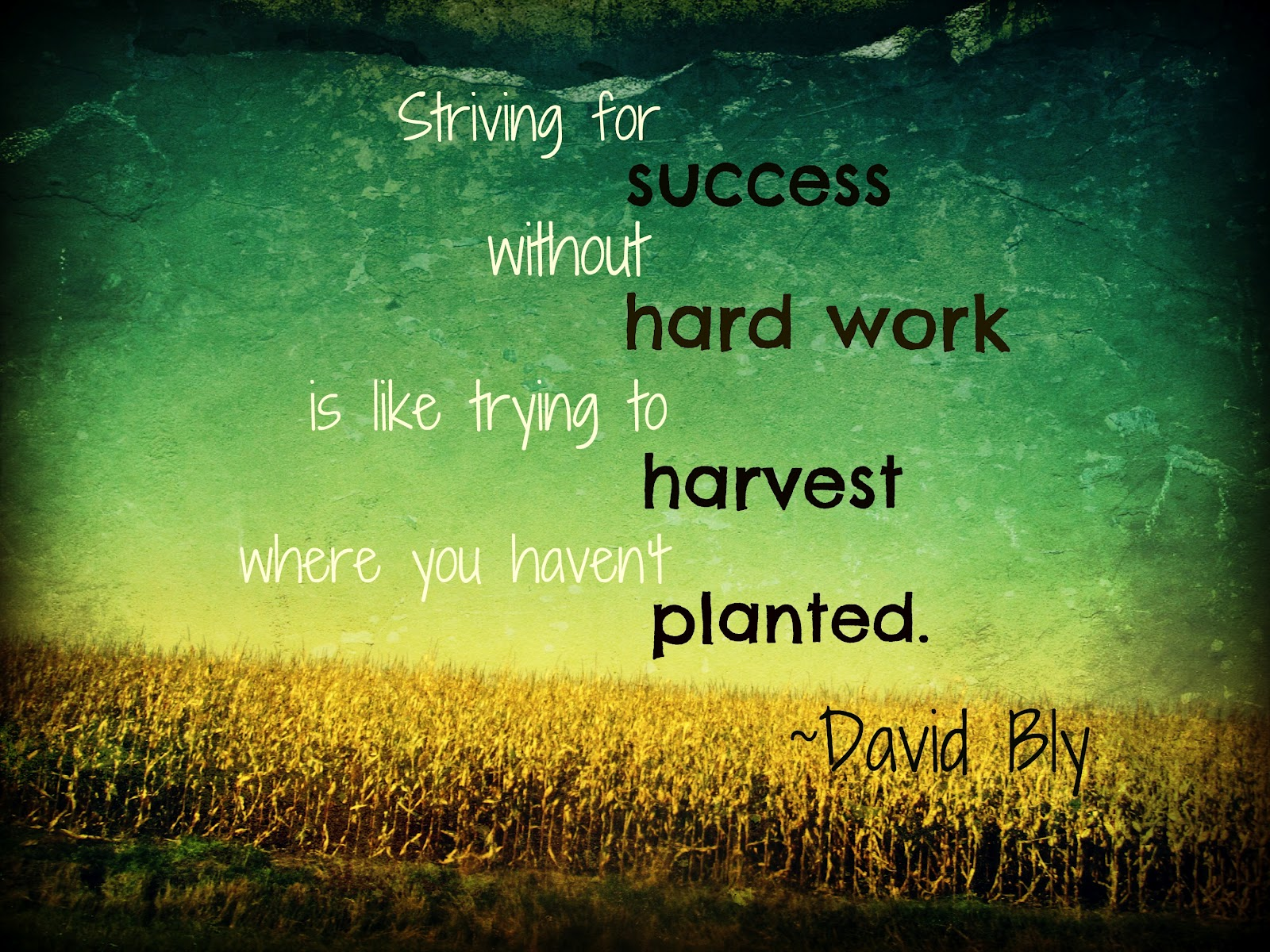 Quotes About Planting Seeds For Life Start Planting  Orlando Espinosa
