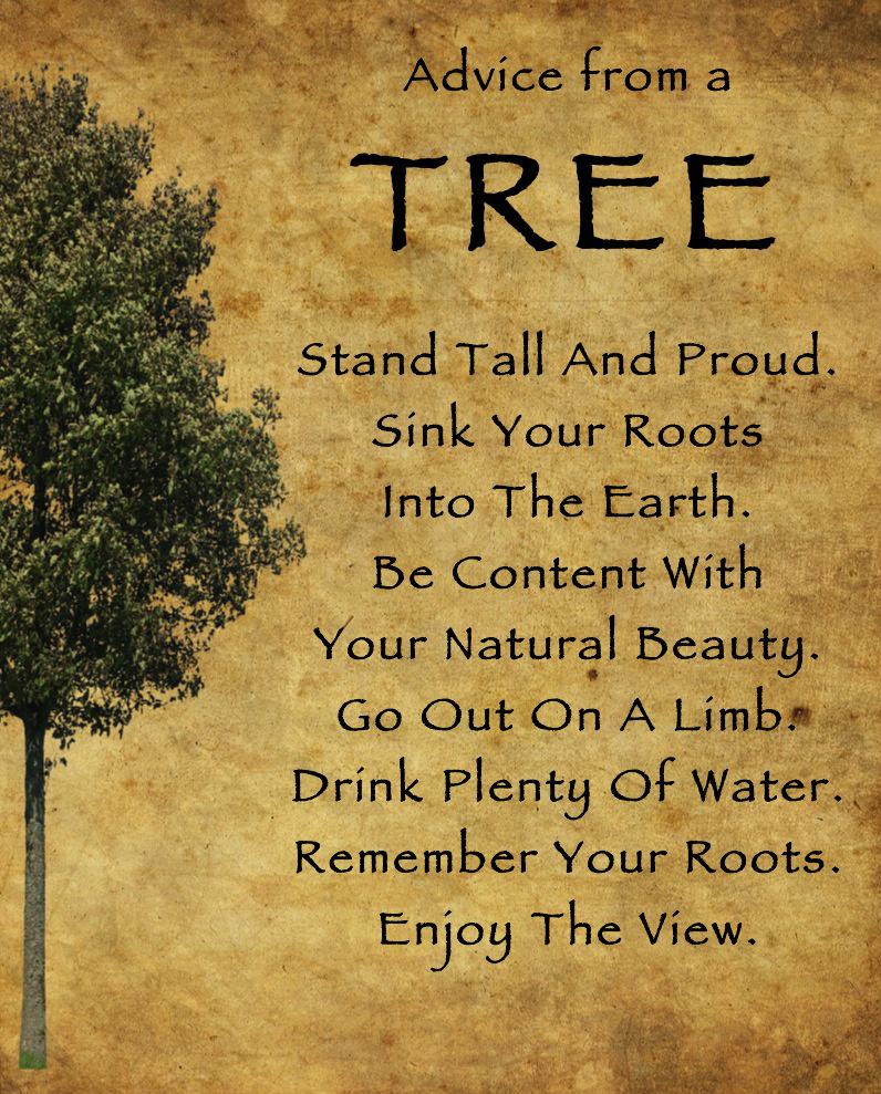 Advice-from-a-tree orlando espinosa